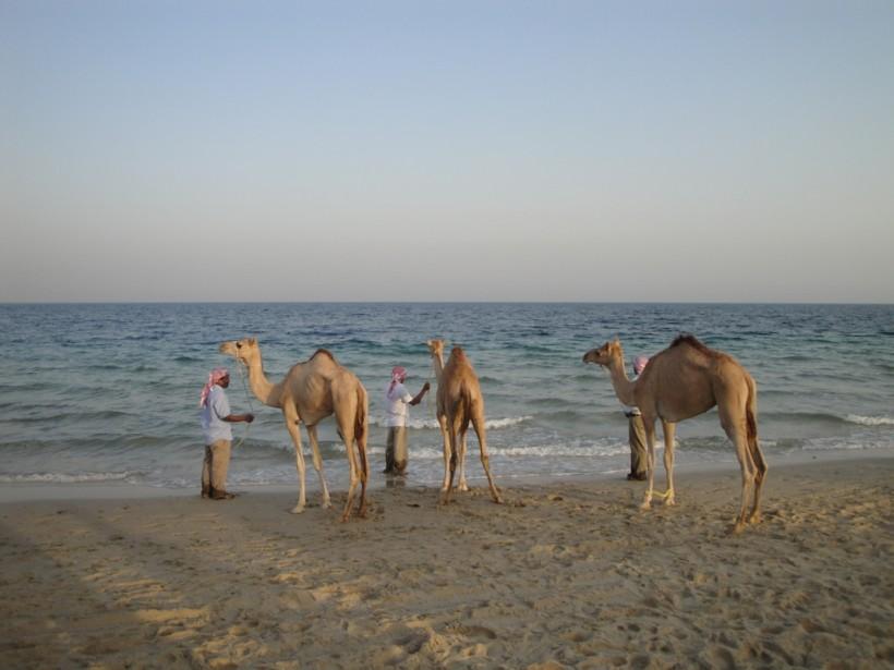 camellostransoceanicos